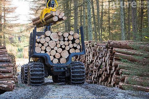 timberload1.jpg