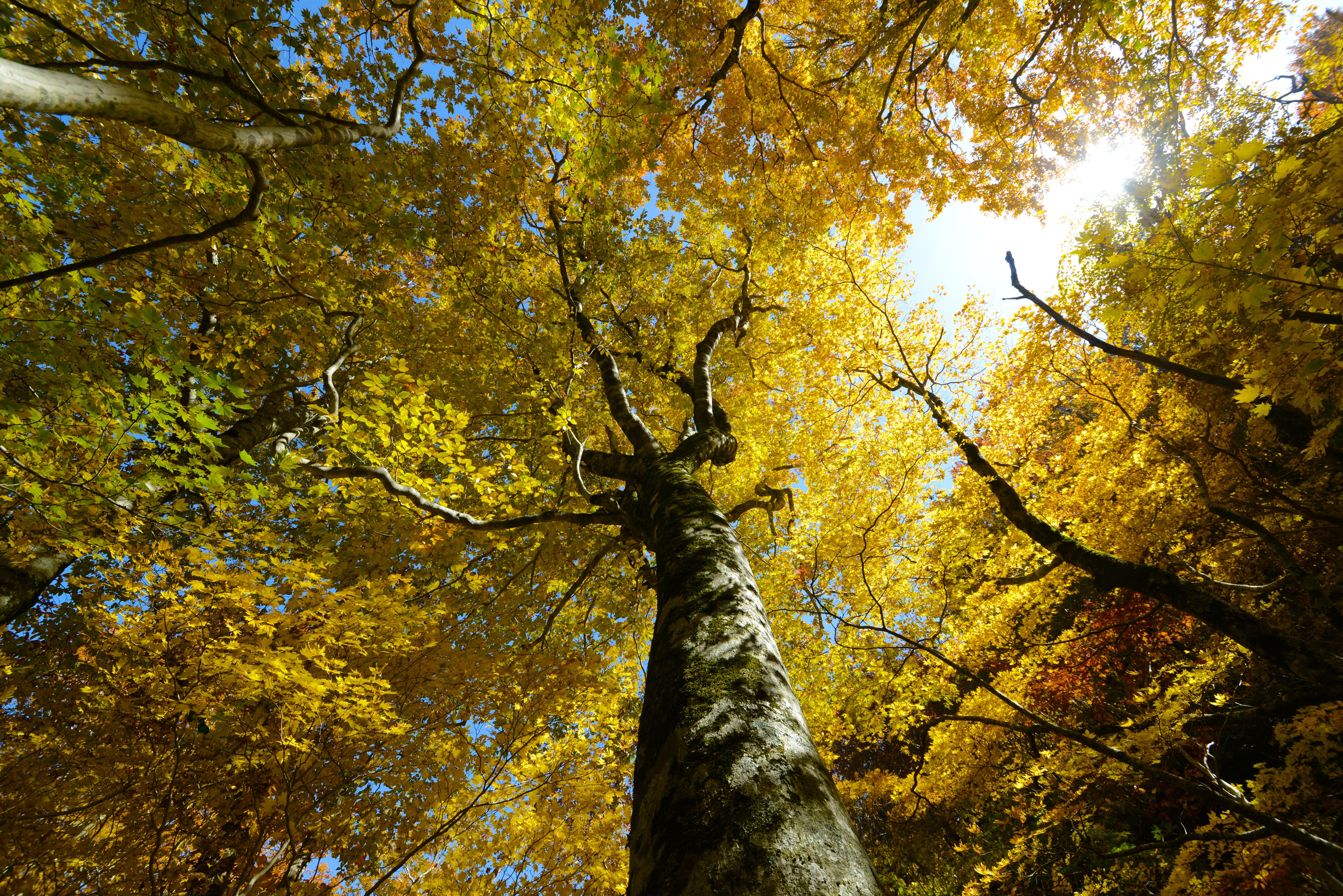 秋橅『木漏陽』
