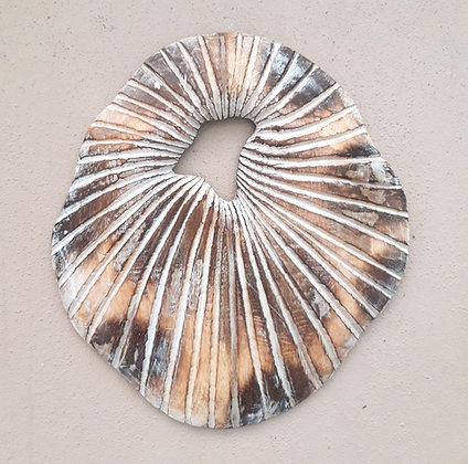 Shabby Chic Large Wood Sand Dollar Shell Design Wall Art 30cm