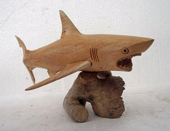 Great White Shark on Parasite Wood