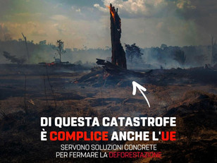 UE COMPLICE DELLA DISTRUZIONE DELLE FORESTE.