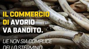 COMMERCIO D'AVORIO, QUANDO HA INTENZIONE DI INTERVENIRE LA COMMISSIONE EUROPEA?