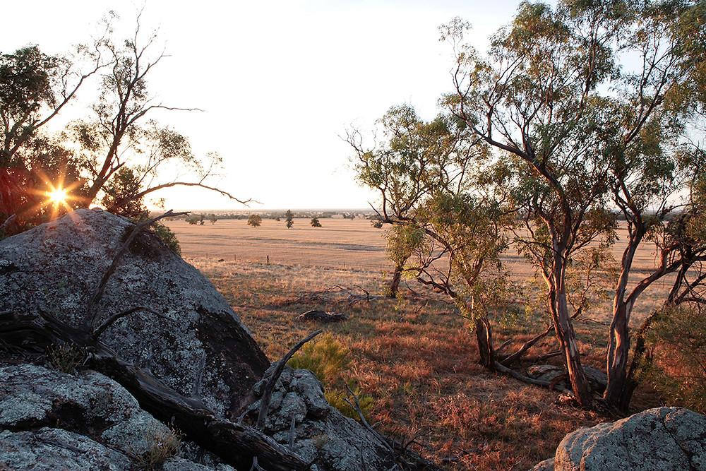 Outback Lamb Tullamore NSW Australia
