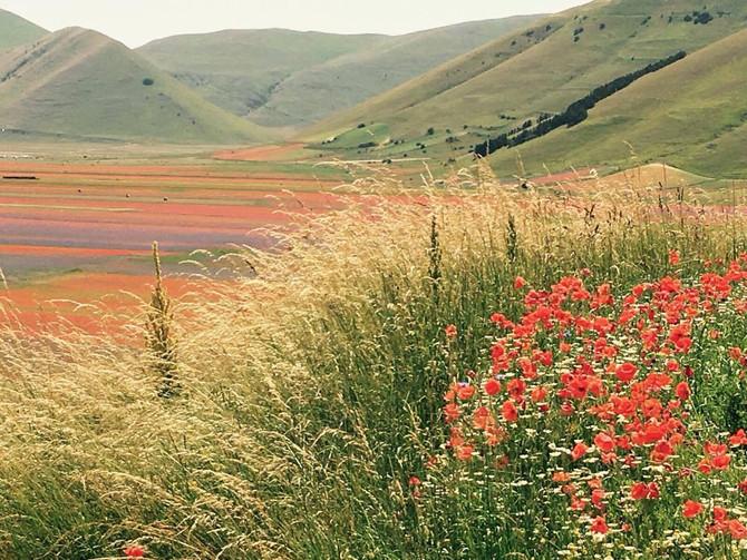 Castelluccio di Norcia, Una fioritura per mille colori.