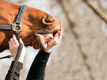 coaching paarden perspectief