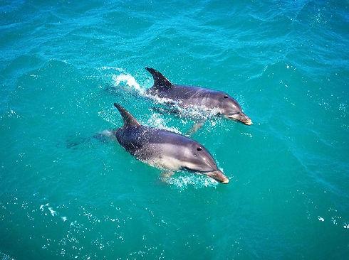 dolphins-mel.jpeg