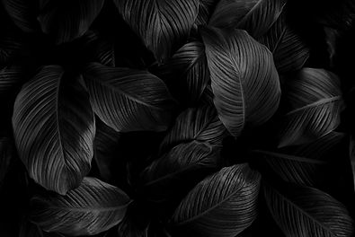 black leaves background.jpg