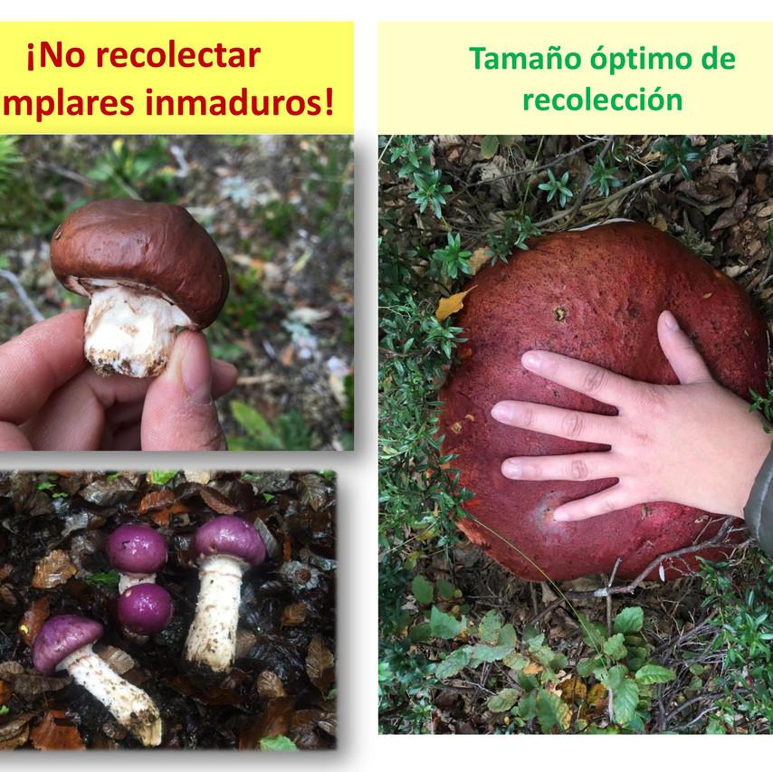 Recolección_Sustentable_HSC