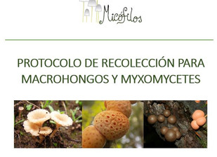 MICOCL: Fungario ONG Micófilos
