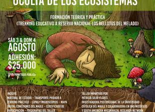 Taller de Hongos y Micorrizas en Linares