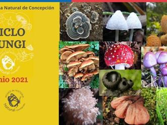 Fungi Cycle MHNC 2021
