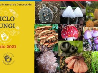 Lanzamiento Ciclo Fungi MHNC 2021