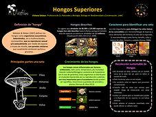 Poster Hongos JPEG.jpg