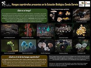 Poster Senda Darwin.jpg