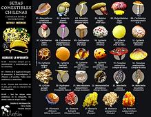 Comestibles nativas.png