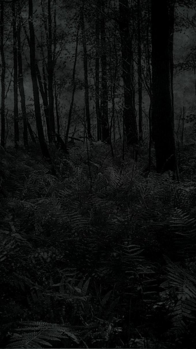 trees dark.jpg