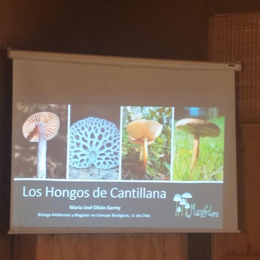 Los hongos de Cantillana