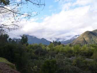 Charla sobre hongos del Bosque Esclerófilo en Encuentro Rao Caya