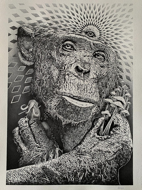 Stoned Ape Theory A1 size