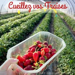 cueillez vos fraises 00