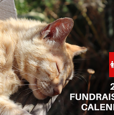 UK Postage 2021 AGA Cat Charity Fundraising Calendar