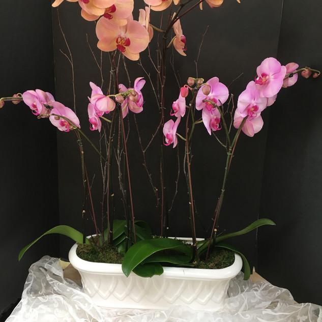 Valentines 16 Orchid Garden