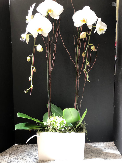 Potted orchid gardens