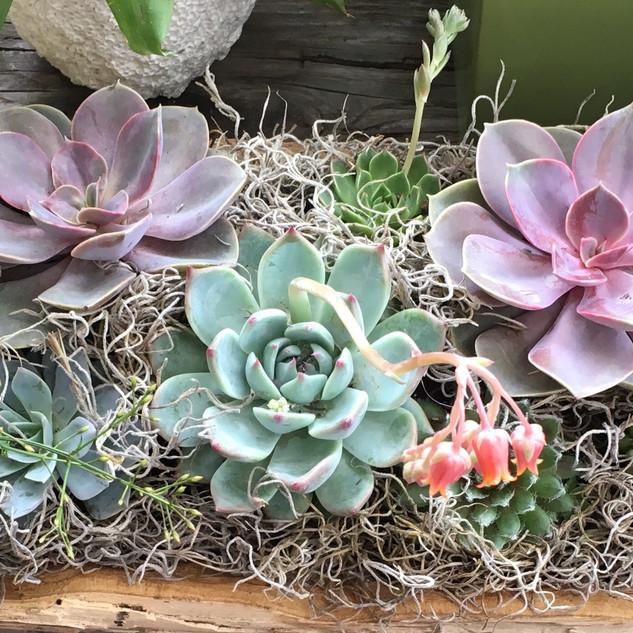Garden 40