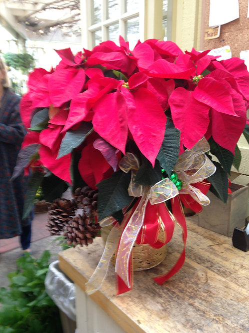 "6 "" Pointsettia Decorated"