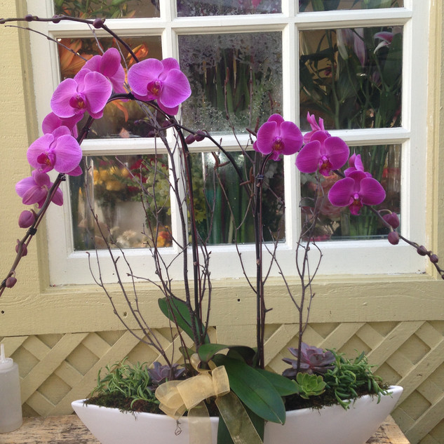 Orchid 13