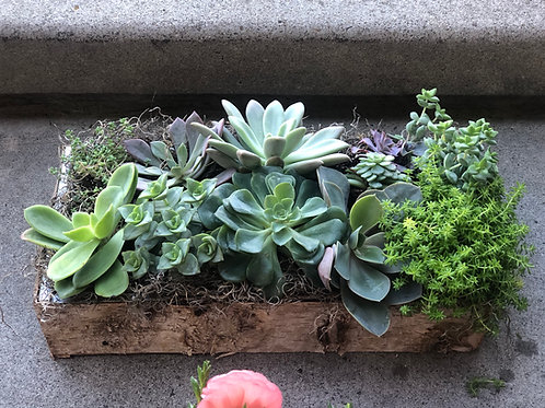 Rectangular birch box filled with succulents