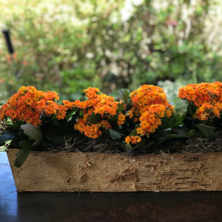 Thanksgiving planter