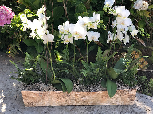 Birch box orchid garden