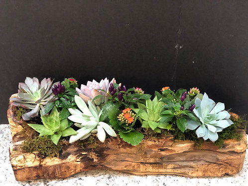 Chestnut wood container filled with succulent and pops of color