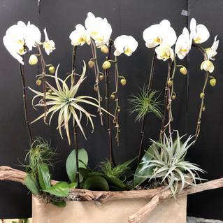 Orchid Garden 4