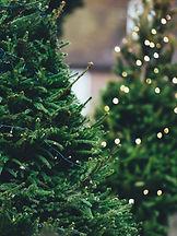 Christmas trees at Broodale Farms