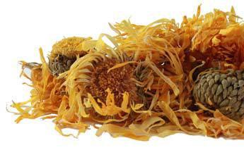 Bulk Dried Calendula Flowers