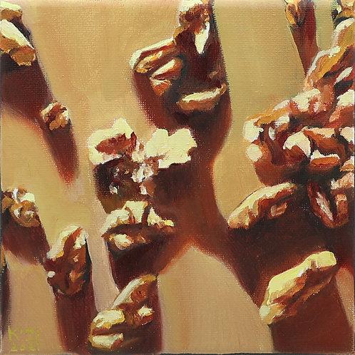 9. Walnuts