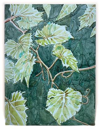 Wild Grape Vine, 2020