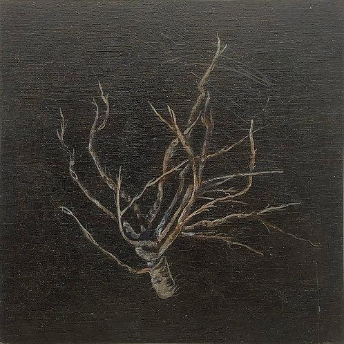 Root/Bulb