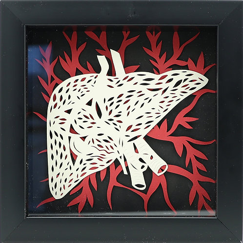 4. Liver