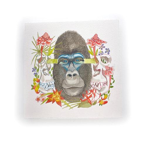 Western Lowland Gorilla - Central Africa