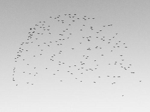 Untitled (Birds), 2020