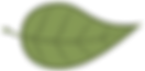 Green Leaf no words.png