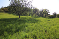 Pozemek Sentice