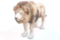 3d-model-lion copy.png