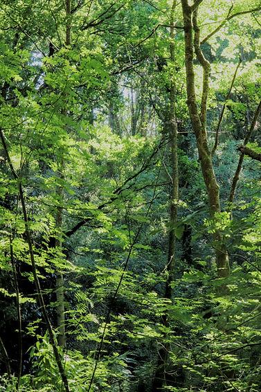 Orphée 1 forêt.jpg