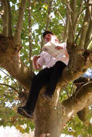 sur-un-arbre2.jpg