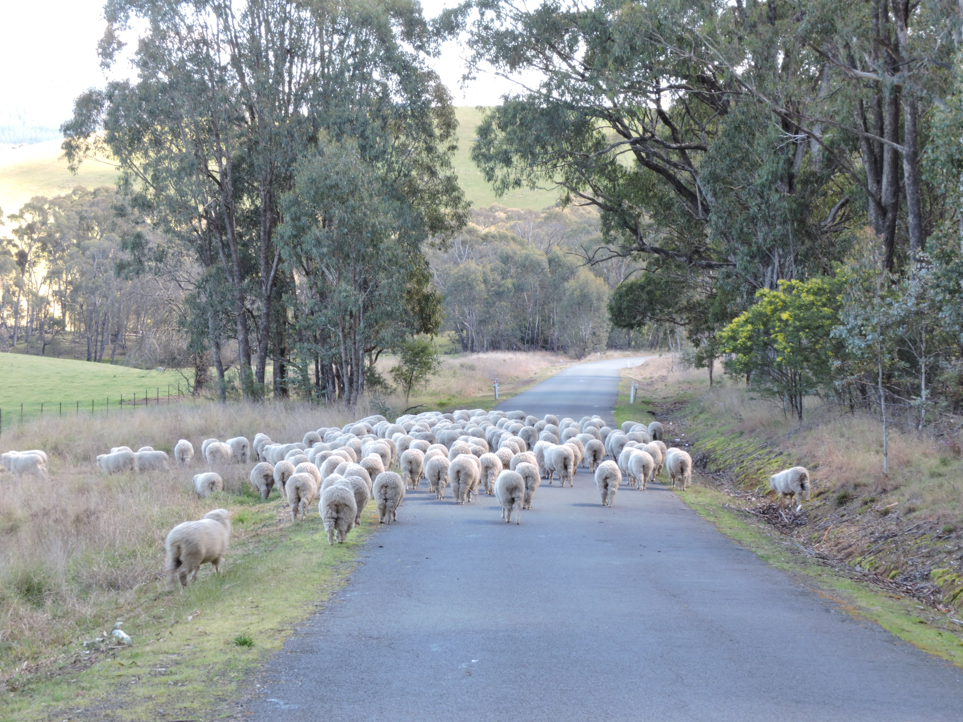 Mustering along the road