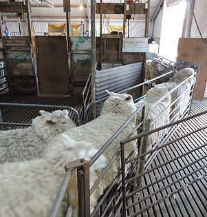 upright shearing platform